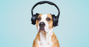 Dog Headphones